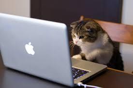 Чем заняться в интернете?